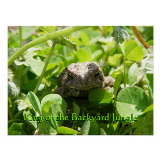 It's a Toad! Poster