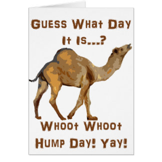 Its Hump Day Greeting Cards