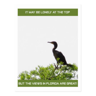 Its Lonely at the Top Florida Post Card