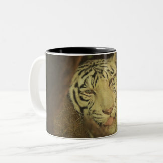 It's Monday Here's your Tiger Cup