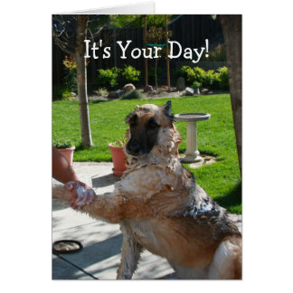 Pictures of German Shepherd Happy Birthday Funny - #rock-cafe