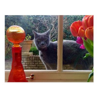 Ivan the Cat postcard