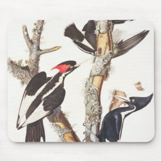 Ivory-billed Woodpecker, 1829, (print) Mouse Pad