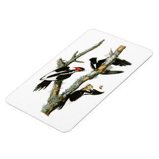 Ivory-billed Woodpecker Audubon Birds of America Rectangular Photo Magnet