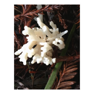 Ivory Coral Fungus Letterhead Template