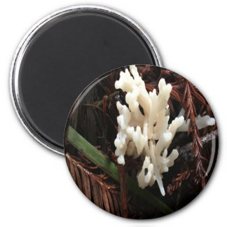 Ivory Coral Fungus Magnet