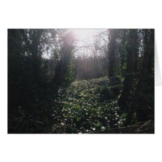 Ivy and Sunbeams Card