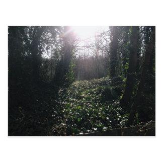 Ivy and Sunbeams Postcard