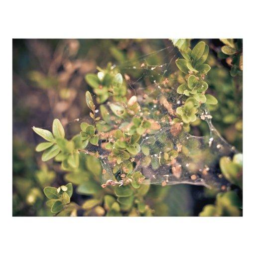 Ivy bush flyer design