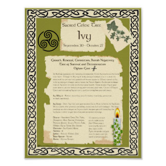 IVY CELTIC SACRED TREE POSTER