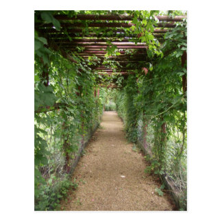 Ivy Covered Walkway Postcard