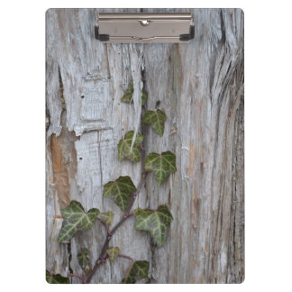 Ivy on a Wall Clipboard