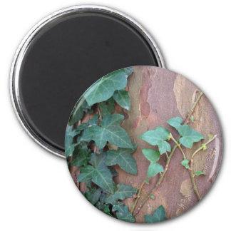 ivy on tree magnet