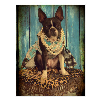 Ivy the Boston Terrier Postcard