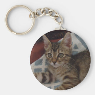 Ivy the tabby kitten keychain