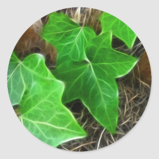 Ivy Vine on Palm Tree 5 Classic Round Sticker