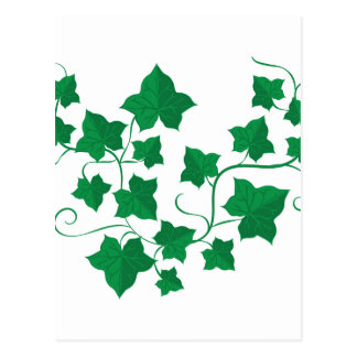 Ivy Vines Postcard