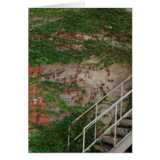 Ivy Vines, Stairs, Brick Wall, Washington, Iowa Card