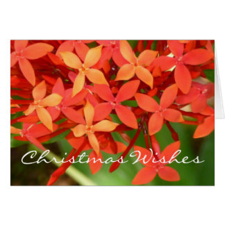 Ixora Blossoms Christmas Notecard
