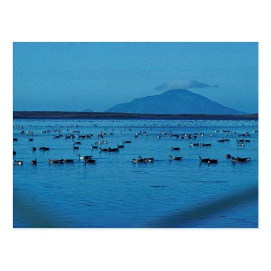 Izembek Lagoon and Amak Island Postcard