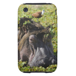 Jacana standing on hippo's (Hippopotamus Tough iPhone 3 Cover