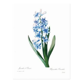 Jacinthe bleue cartes postales