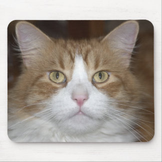 Jack domestic orange and white maine coon cat mouse pad