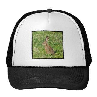 Jack Rabbit cap Mesh Hats