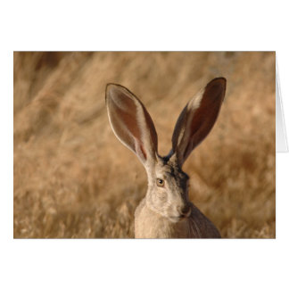 Jack rabbit with large ears photo greeting card