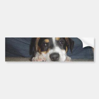 Jack russel terrier--cute bumper sticker