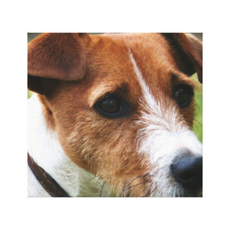 Jack Russell Canvas
