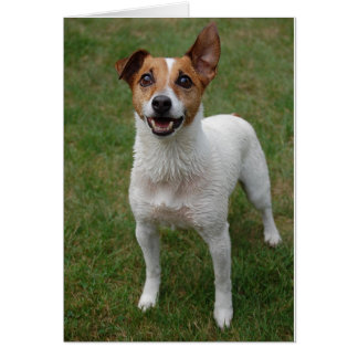 Jack Russell Card
