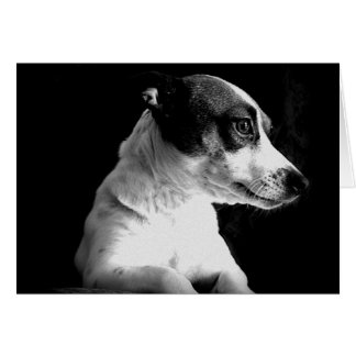 Jack Russell in thought Card
