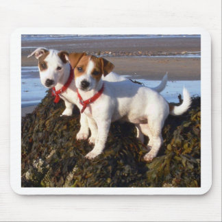 Jack Russell Puppies Mouse Pad