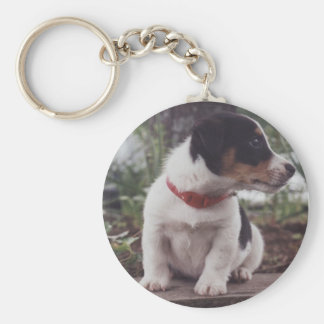 Jack Russell puppy Basic Round Button Keychain