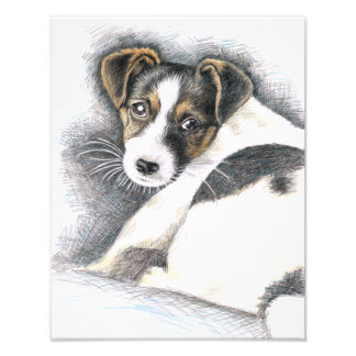 Jack Russell puppy - Jack Russell Puppy Photo