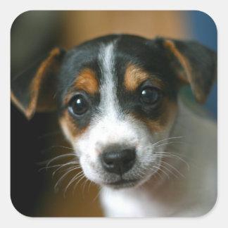 Jack Russell Puppy Sticker Sheet
