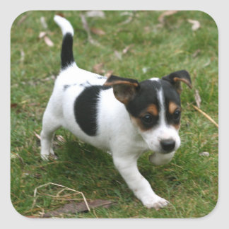 Jack Russell Puppy Sticker Sheet #1