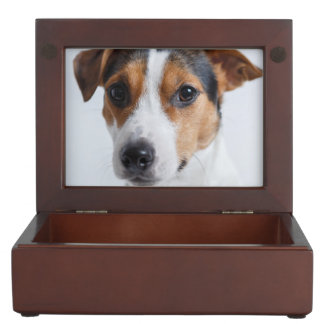 Jack russell terrer keepsake box