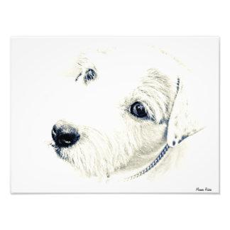 Jack Russell Terrier Art Photo