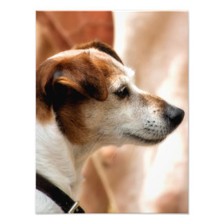 JACK RUSSELL TERRIER DOG PHOTO PRINT