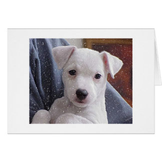 Jack Russell Terrier Dog Portrait Blank Card
