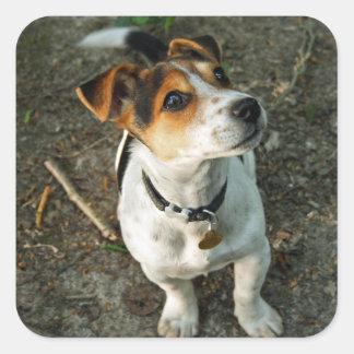 Jack Russell Terrier in Woods sticker sheet