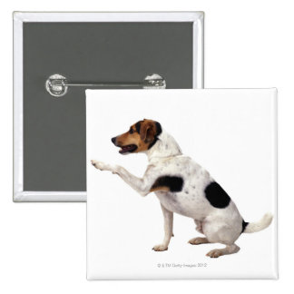 Jack Russell Terrier Lifting Paw 2 Inch Square Button