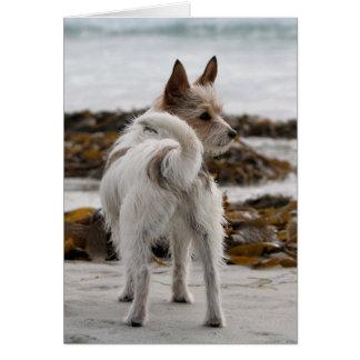 Jack Russell Terrier Mix - Winnie - Oman Card