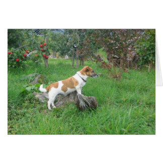 Jack Russell Terrier on Rock Card