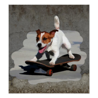 Jack Russell Terrier on Skateboard Poster