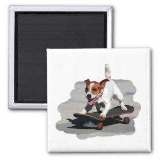 Jack Russell Terrier on Skateboard Square Magnet