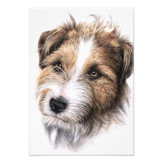 Jack Russell Terrier portrait Photograph