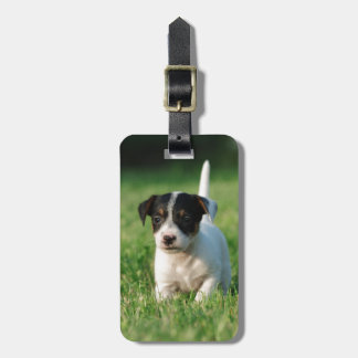 Jack Russell Terrier puppy Luggage Tag